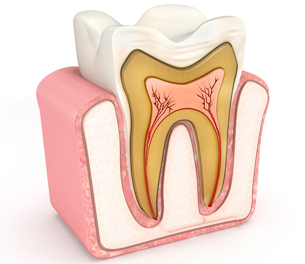 diagram of what the interior of a tooth looks like